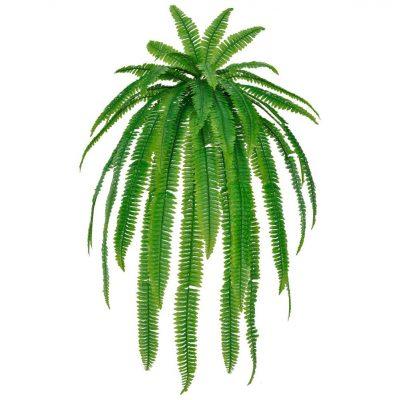 HELECHO Plantas Decorativas