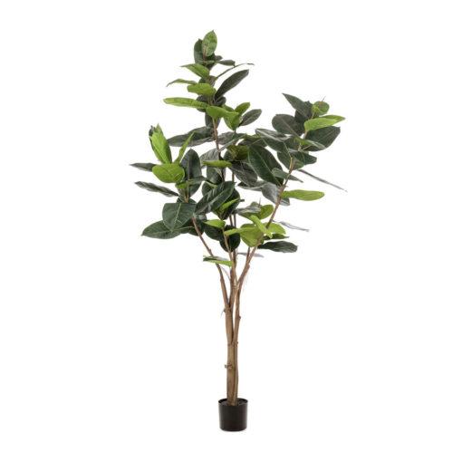 ÁRBOL LYRATA Plantas Decorativas